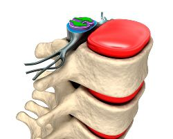 Animated stock photo of the spinal area of a skeleton.